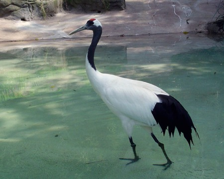red-crowned-crane-29_web-res2
